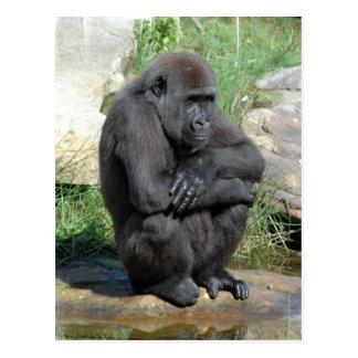 Carte postale se reposante de Gorila