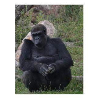 Carte Postale Séance de gorille