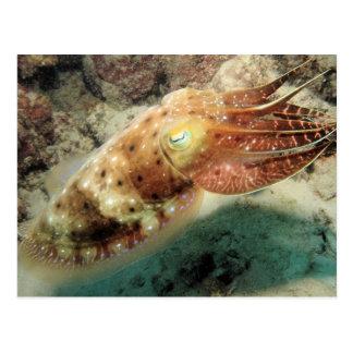 Carte Postale Seiches, la Grande barrière de corail, cairns,