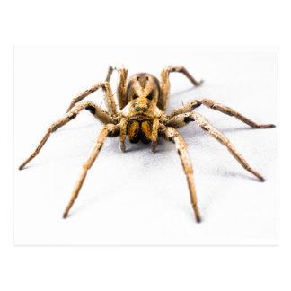 Carte Postale Sens d'araignée