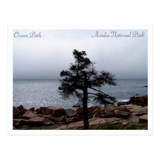 Carte Postale Sentinelle solitaire sur le chemin d'océan