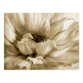 Carte Postale Sépia blanche et arrière - plan crème de dahlia