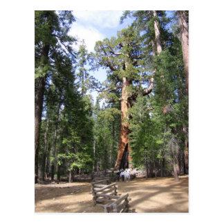 Carte Postale Séquoia géant, parc national de Yosemite