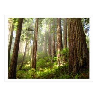 Carte Postale Séquoias
