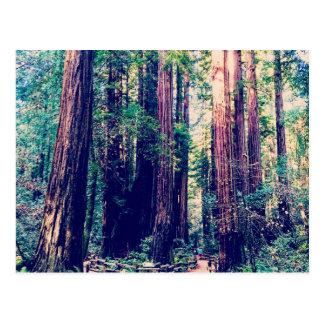 Carte Postale Séquoias de Californie