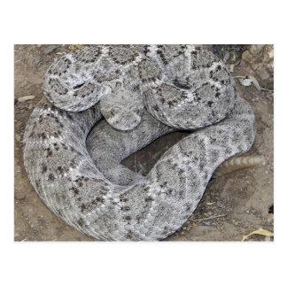 Carte Postale Serpent à sonnettes de dos en forme de losange