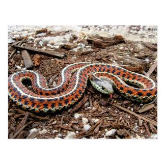Carte Postale Serpent de jarretière côtier