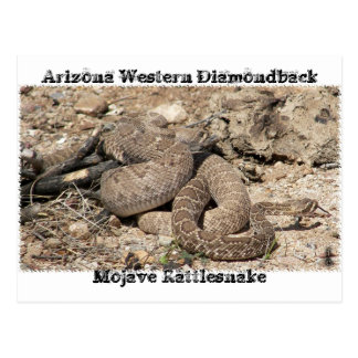 Carte Postale Serpents de l'Arizona