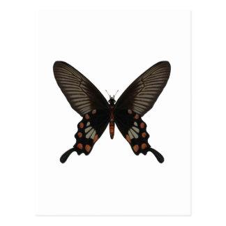 Carte Postale S'est levé le papillon de queue d'hirondelle