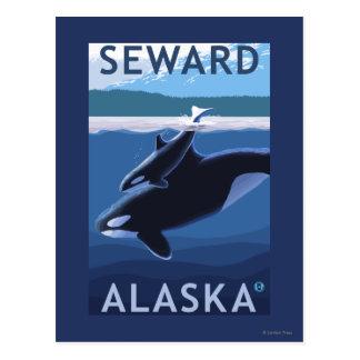 Carte Postale Seward, AlaskaOrca et scène de veau