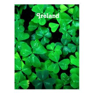 Carte Postale Shamrocks irlandais