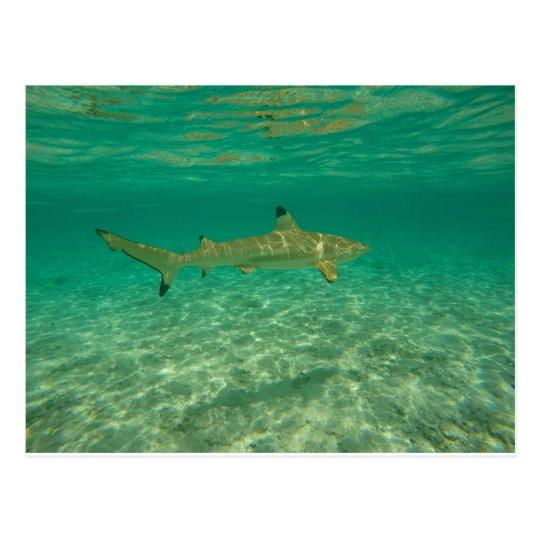 Carte Postale Shark in bora bora
