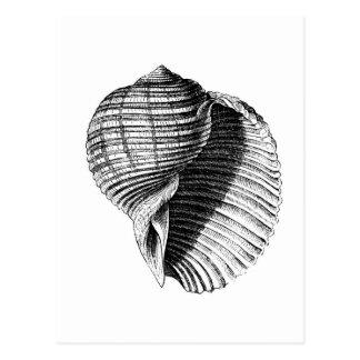 Carte Postale Shell