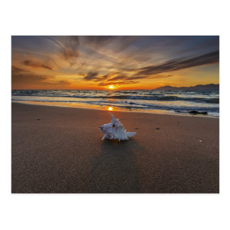 Carte Postale Shell à la plage à l'île du coucher du soleil |