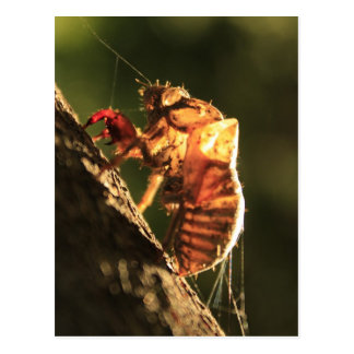 Carte Postale Shell d'une cigale