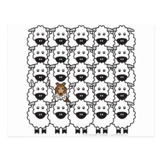 Carte Postale Sheltie chez les moutons