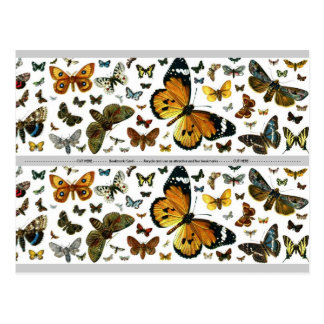 Carte Postale Signet ancien d'image de papillons colorés