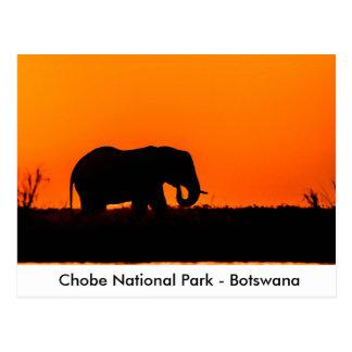 Carte Postale Silhouette d'un éléphant Taureau au coucher du