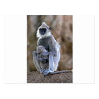 Carte Postale Singe et bébé gris de Langur de sommeil