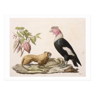 Carte Postale Singe et condor de lion, indigènes au Chili ou en