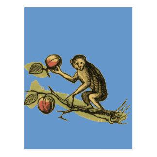 Carte Postale Singe et ses noix de coco
