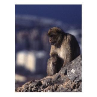 Carte Postale Singe songeur au Gibraltar