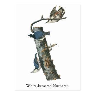 Carte Postale Sittelle Blanche-breasted, John Audubon