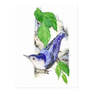 Carte Postale Sittelle blanche de Breasted d'aquarelle - oiseau