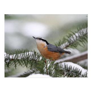 Carte Postale Sittelle sur la branche de Milou en hiver