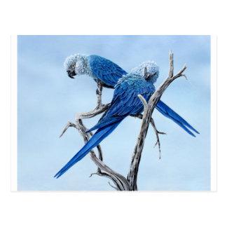 Carte Postale Six cadeaux d'ara pour l'amant de perroquet