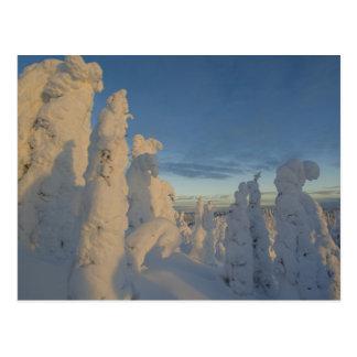 Carte Postale Snowghosts au coucher du soleil à la montagne 2 de