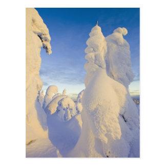 Carte Postale Snowghosts au coucher du soleil à la montagne de