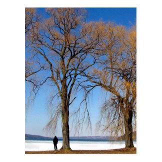 Carte Postale Solitude - lac Cayuga