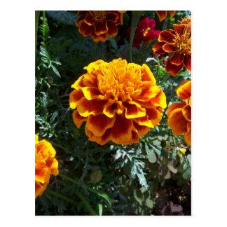 Carte Postale Soucis oranges verticaux