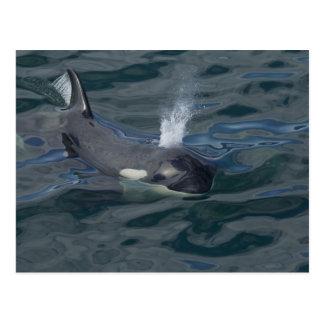 Carte Postale Soufflement d'orque