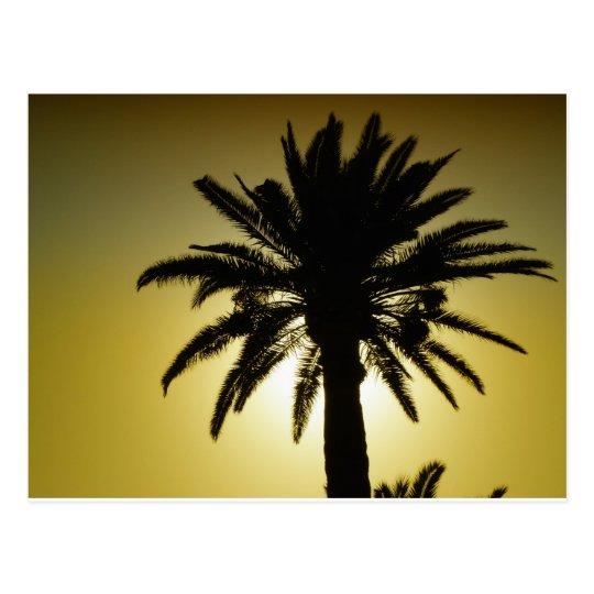 Carte Postale Sous les palmiers