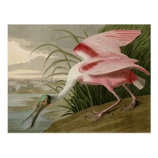 Carte Postale Spatule rose
