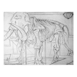 Carte Postale Squelette de mammouth laineux