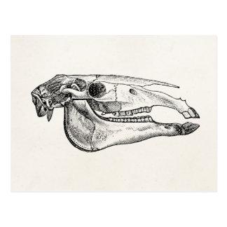 Carte Postale Squelette personnalisé par squelette vintage de