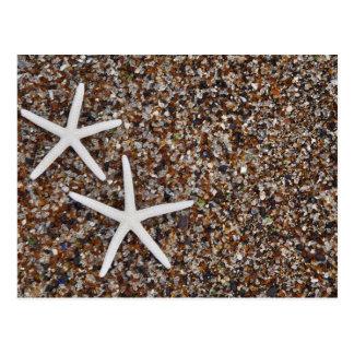 Carte Postale Squelettes d'étoiles de mer sur la plage en verre