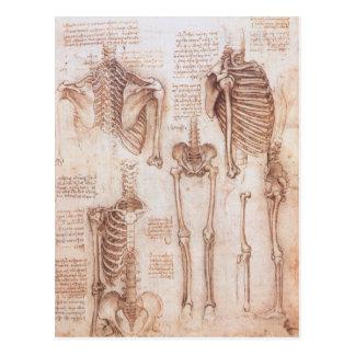 Carte Postale Squelettes humains d'anatomie par Leonardo da