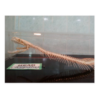 Carte postale squelettique principale de serpent