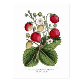 Carte Postale Stawberry