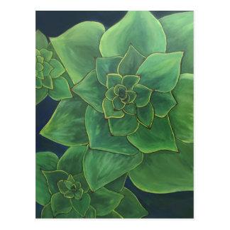Carte Postale Succulents verts