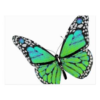 Carte Postale Sujet d'insecte