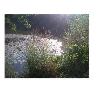 Carte Postale Summer lake