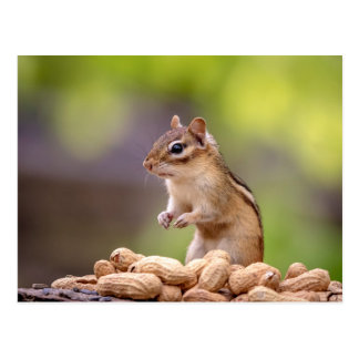 Carte Postale Tamia avec des arachides