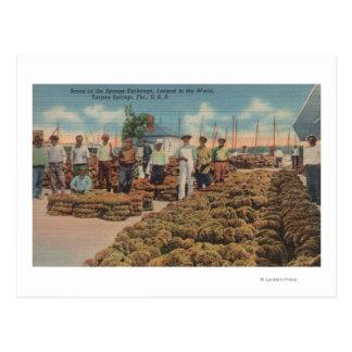 Carte Postale Tarpon Springs, FL - scène d'échange d'éponge