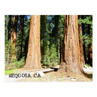 Carte postale tellement belle de séquoia !