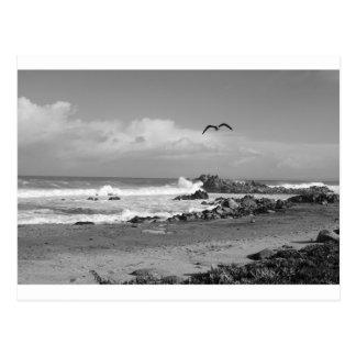 Carte Postale Tempête Pacifique de verger dans noir et le blanc